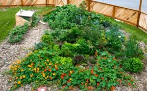 My Abundant Garden